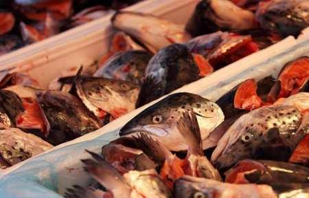 Тонны опасной рыбы нашли в Артеме.