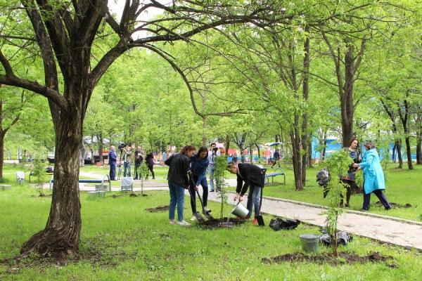 От вырубки к высадке, в Артеме ведется высадка деревьев.