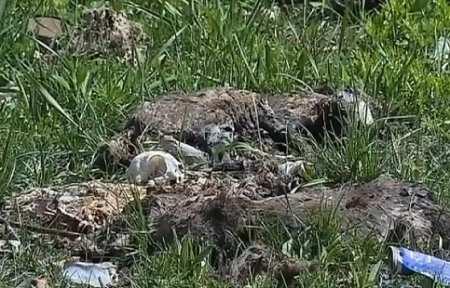 Десятки трупов изувеченных животных нашли в Артеме.