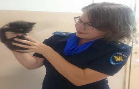 В Артеме сотрудники полиции спасли котенка, оказавшегося на оживленной дороге.