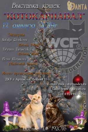 Международная выставка кошек в Артёме 12 января 2019