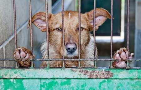Администрация города Артема готова выделить 1,9 миллиона рублей на отлов бродячих собак.
