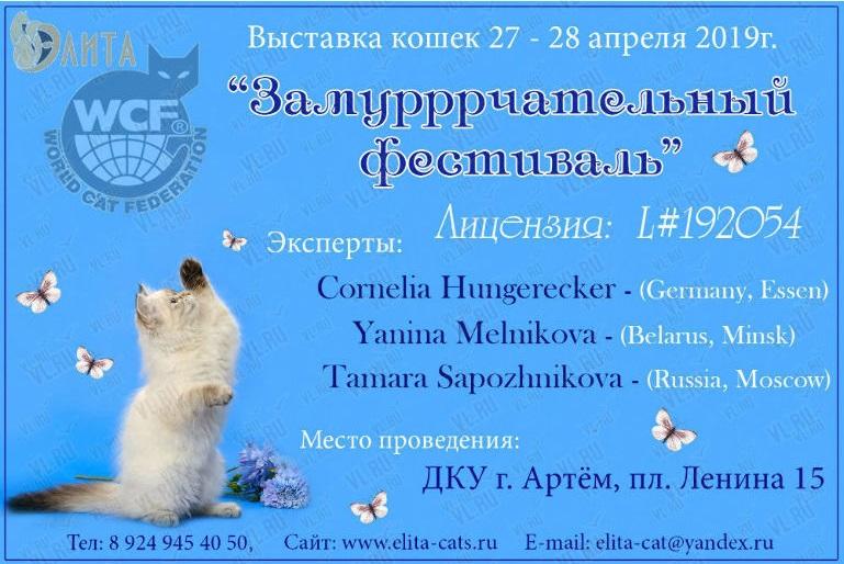 Международная выставка кошек в Артёме 27 апреля 2019