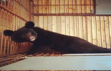 Сотрудники охотнадзора передали двух медвежат в реабилитационный центр.