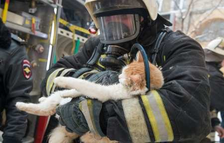 На пожаре в жилом доме в городе Артеме сотрудники МЧС спасли 4-х человек и 2-х котов.