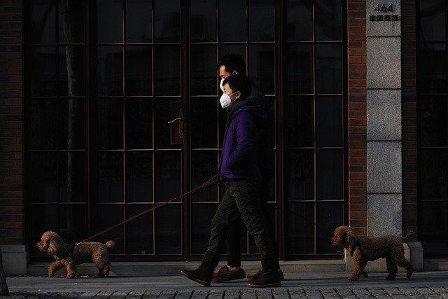 «Животный» коронавирус не опасен для человека