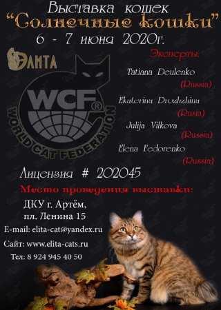 Международная выставка кошек в Артёме 6 июня 2020