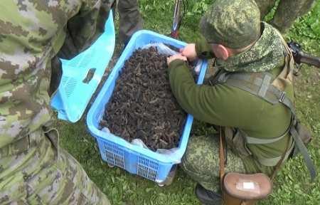 В Приморье незаконным путем было добыто почти 170 особей трепанга.